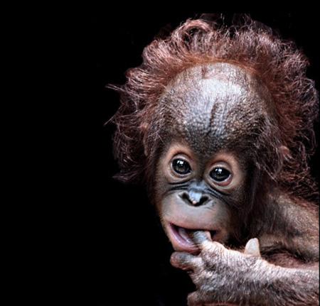 Divlje životinje - portreti