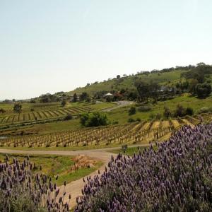 2 Najpoznatije vinske regije