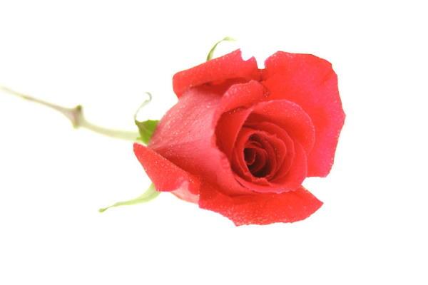 Pokloni za žene za Valentinovo prema dužini veze