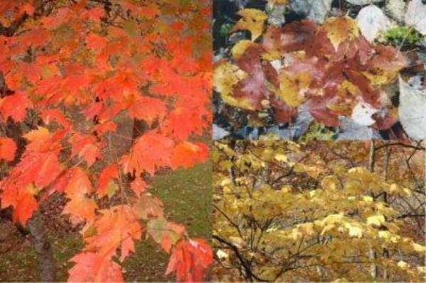 Zašto lišće u jesen mijenja boju?
